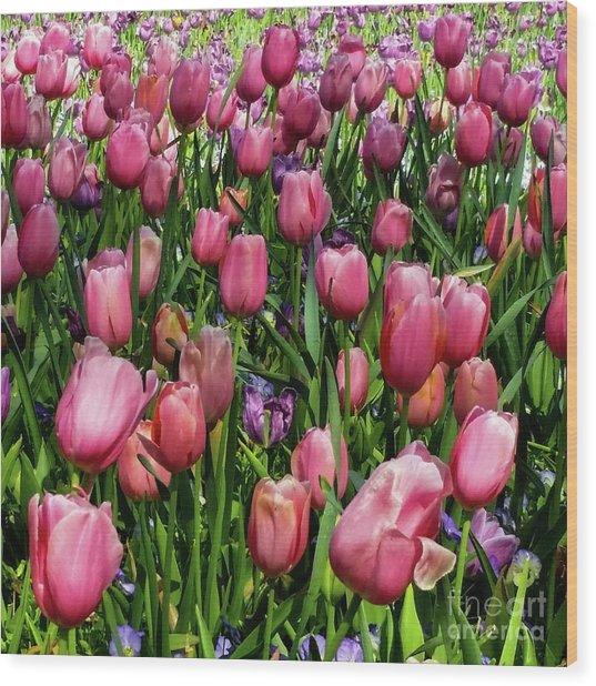 Tulip Flowers  Wood Print