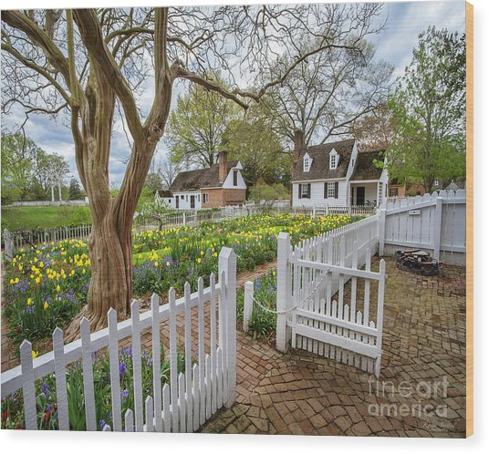 Tulip Garden Colonial Williamsburg  Wood Print
