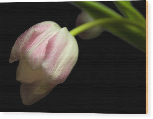 Tulip In Soft Light Wood Print