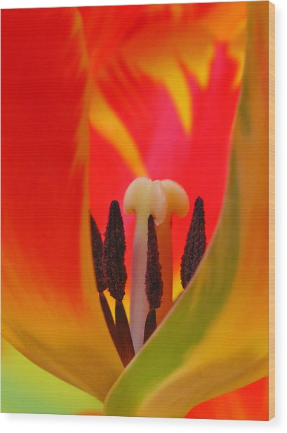 Tulip Intimate Wood Print