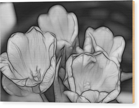 Tulip Line Study Wood Print by Kevin  Sherf