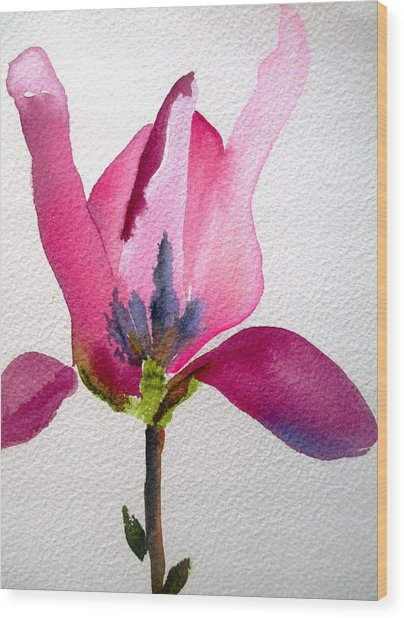 Tulip Magnolia Wood Print by Sacha Grossel