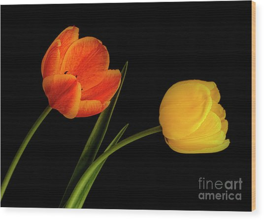 Wood Print featuring the photograph Tulip Pair by Scott Kemper