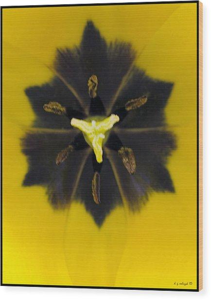 Tulip Pixie Wood Print by Daniel G Walczyk