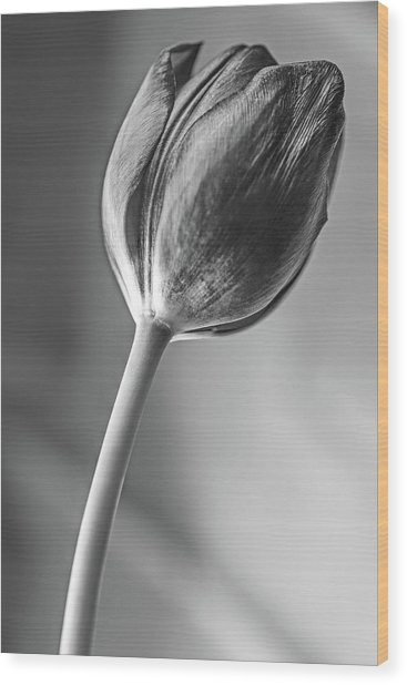 Tulip Shadow And Light Wood Print