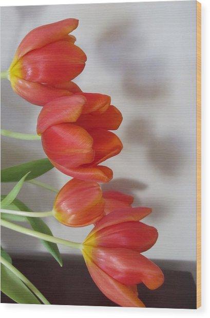 Tulip Shadow Wood Print by Judith Turner