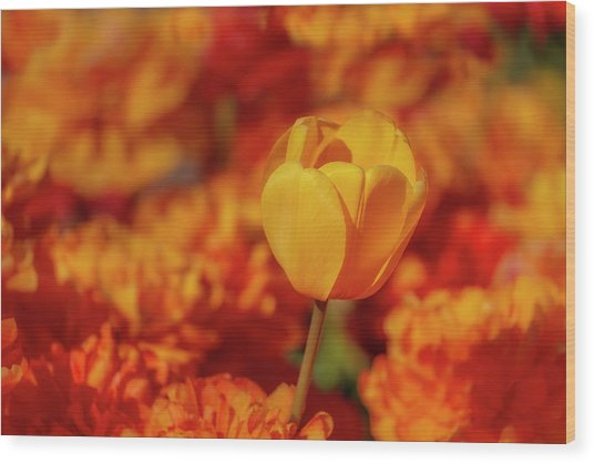 Wood Print featuring the photograph Tulip Standout by Susan Candelario