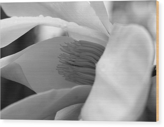 Tulip Tree Bloom Wood Print by Scott Gould