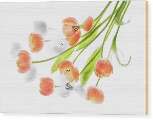 A Creative Presentation Of A Bouquet Of Tulips. Wood Print