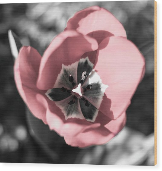 Tulip Up Close Wood Print