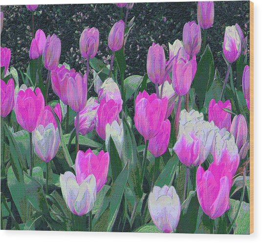 Tulips 327dp Wood Print by Brian Gryphon