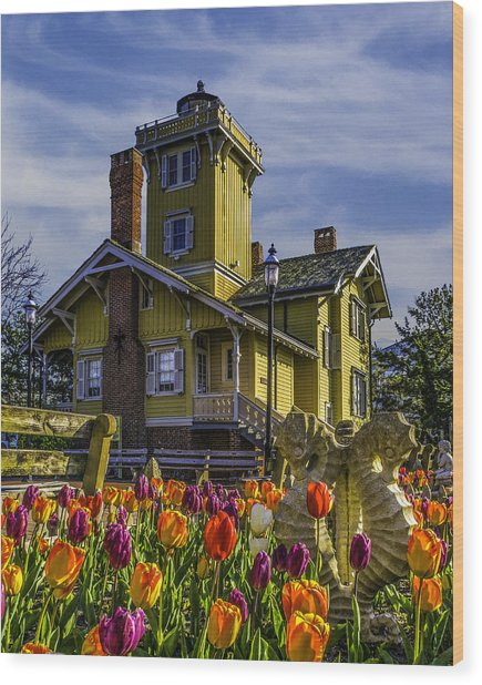Tulips Af Hereford Light Wood Print