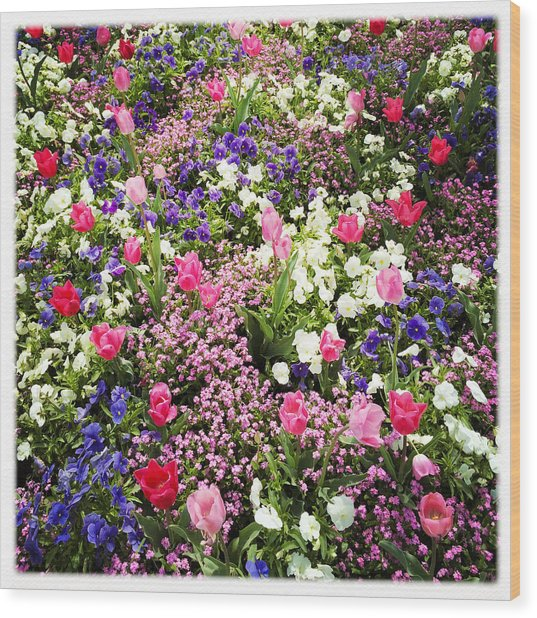Tulips And Other Colorful Flowers In Spring Wood Print