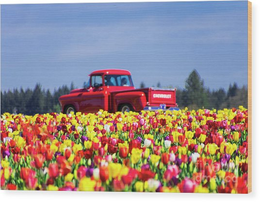 Tulips And Red Chevy Truck Wood Print