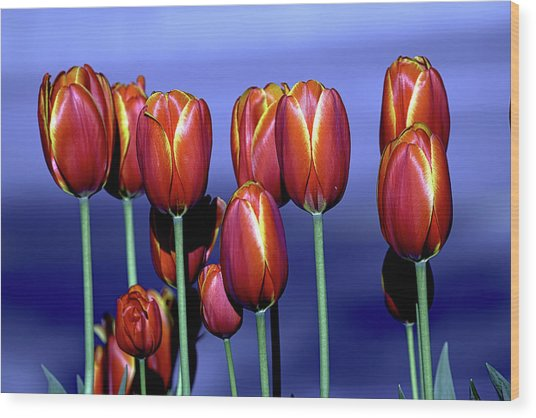 Tulips At Attention Wood Print