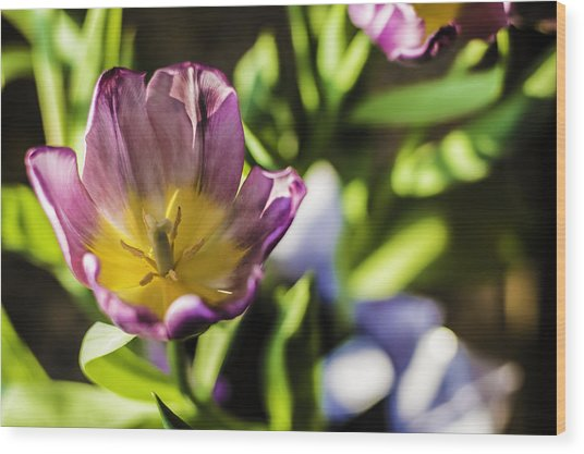 Tulips At The End Wood Print