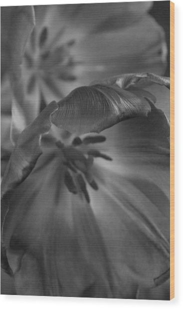 Tulips Backlit Wood Print