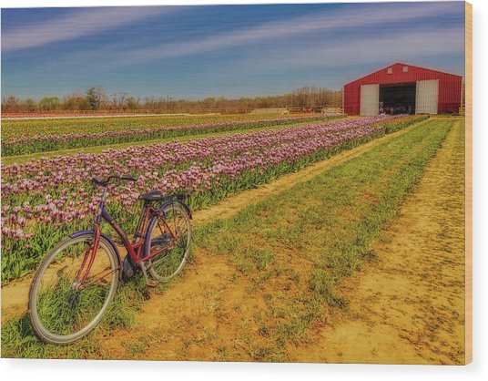 Wood Print featuring the photograph Tulips, Bicycle And Barn by Susan Candelario