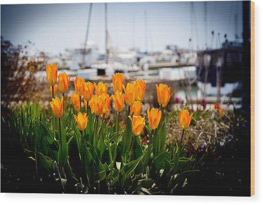 Tulips By The Harbor Wood Print