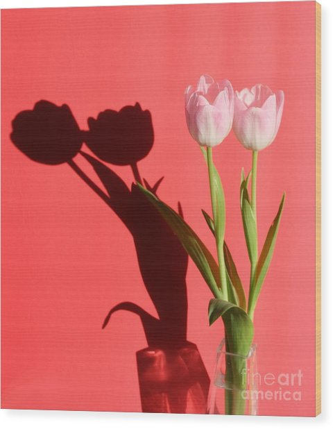 Tulips Casting Shadows Wood Print