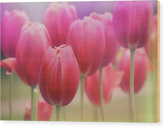 Tulips Entwined Wood Print