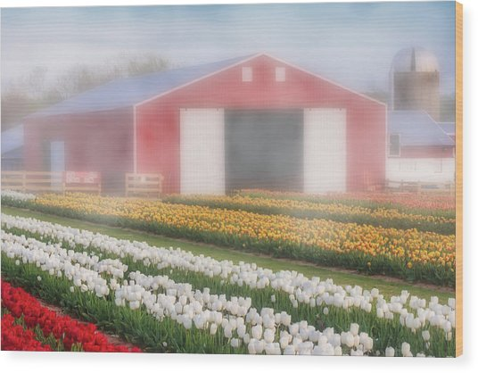 Wood Print featuring the photograph Tulips, Fog And Barn by Susan Candelario