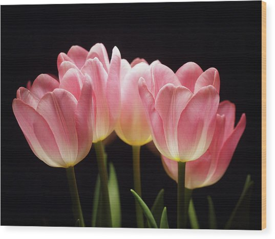 Tulips For Tania Wood Print
