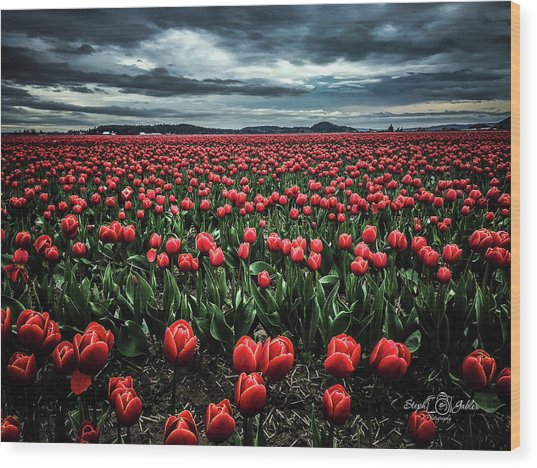 Tulips Forever Wood Print
