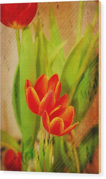Tulips In Harmony Wood Print