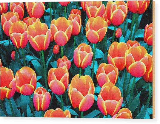 Tulips In Holland Wood Print by Gene Sizemore