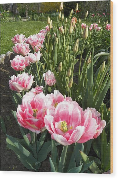 Tulips In Pink Wood Print