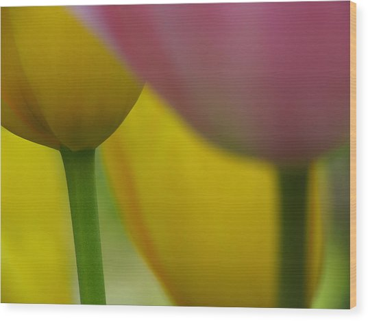 Tulips Wood Print by Juergen Roth