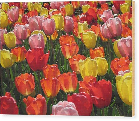 Tulips Like Sunlight Wood Print