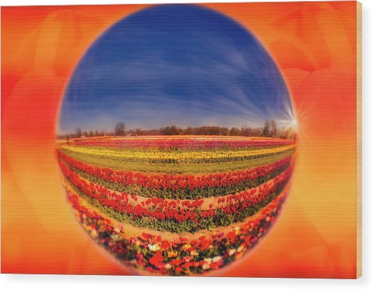 Wood Print featuring the photograph Tulips Reflections And Refractions by Susan Candelario