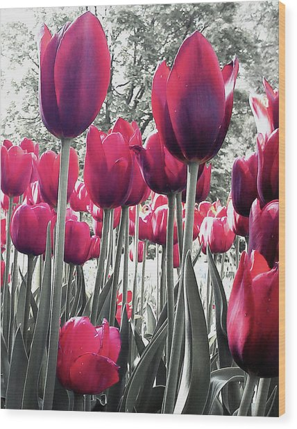Tulips Tinted Wood Print