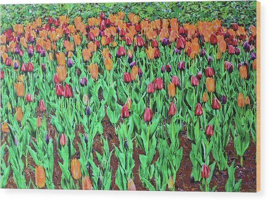 Wood Print featuring the painting Tulips Tulips Everywhere by Deborah Boyd