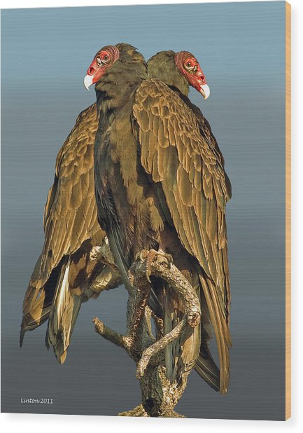 Turkey Vultures 2 Wood Print