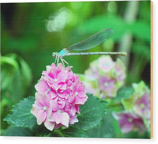 Turquiose Dragonfly  And Hydrangea Wood Print by Heather S Huston