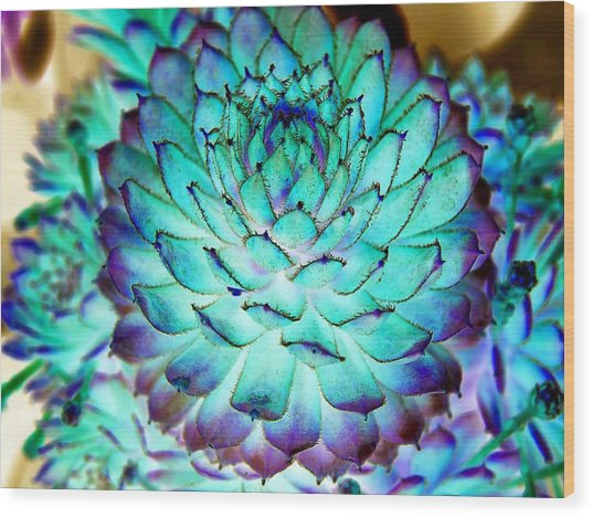 Wood Print featuring the photograph Turquoise Succulent 2 by Marianne Dow