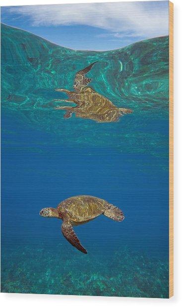 Turtle And Sky Wood Print