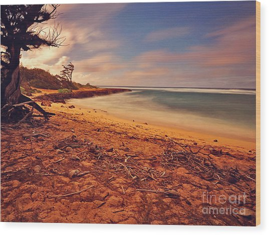 Turtle Bay Point  Wood Print
