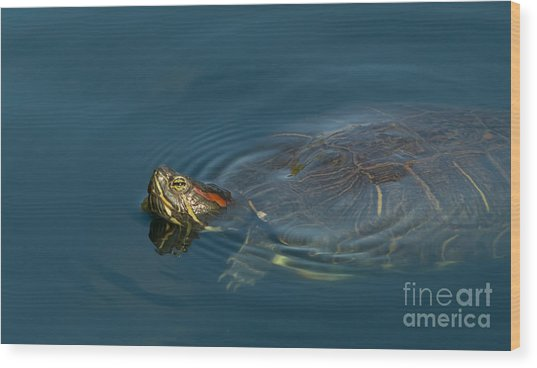 Turtle Floating In Calm Waters Wood Print