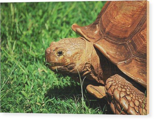 Turtle Wood Print by Lakida Mcnair
