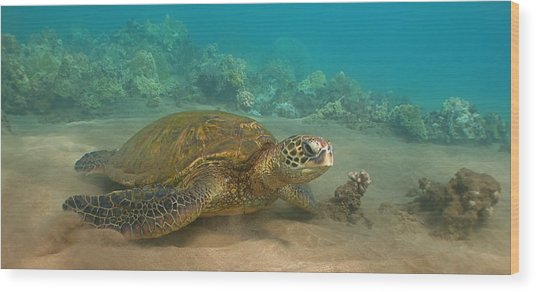 Turtle Magic Wood Print
