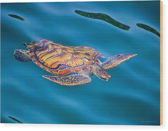 Turtle Up Wood Print