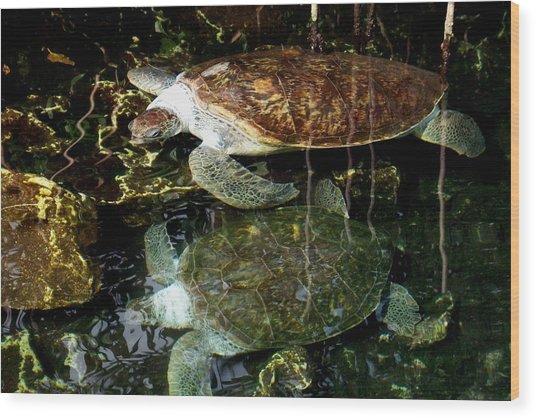 Turtles Wood Print