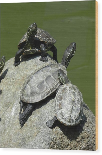 Turtles At A Temple In Narita, Japan Wood Print