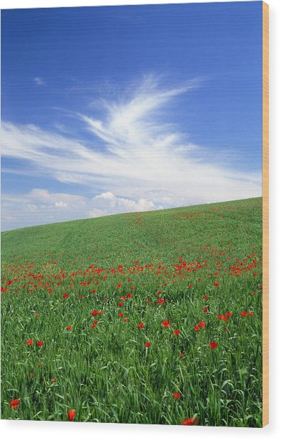 Tuscan Clouds Wood Print by Michael Hudson