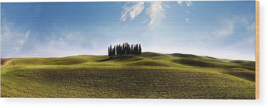 Tuscan Cypress Tree Wood Print