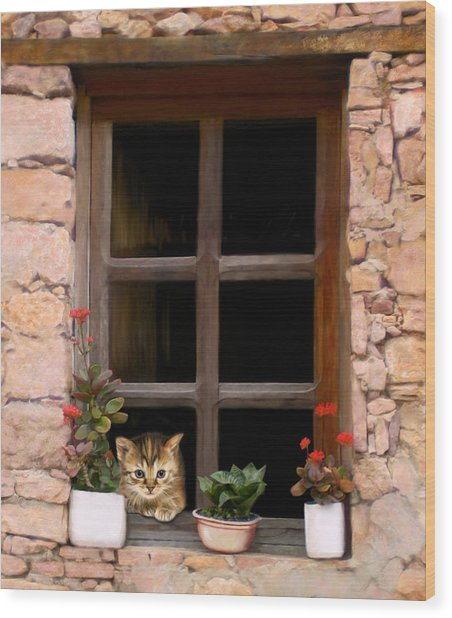 Tuscan Kitten In The Window Wood Print by Bob Nolin